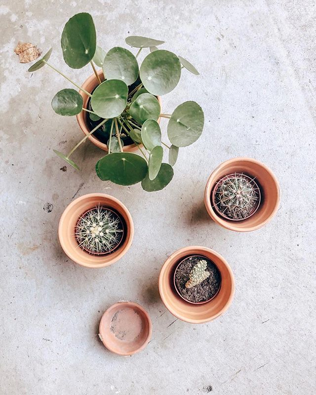 Love it. #Repost #lpchome @muhkennzee ・・・ I know I sound like a crazy (plant) lady when I say this, but it's just something about them that make me happy. I think it's the refreshing tones of green against the warm colored terracotta and also acknowledging that these things are living! It's incredible! Each plant is different and unique in their own way. Some need more attention or less sunshine than others.. kind of like people 🤓🌱 Welcome to the fam.