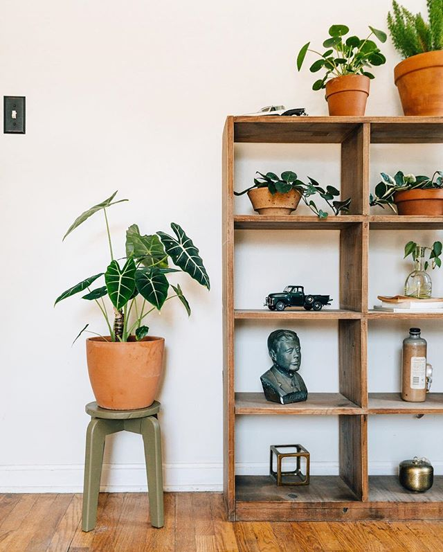 We have a lot of planter and pot options for you at the store. If you purchase a pot with your plant, we'll happily repot it for you! • • p.s. follow @_forthehome for some major plant styling and design inspiration! 📸: @_forthehome • • #lpchome #lakewoodplantcompany
