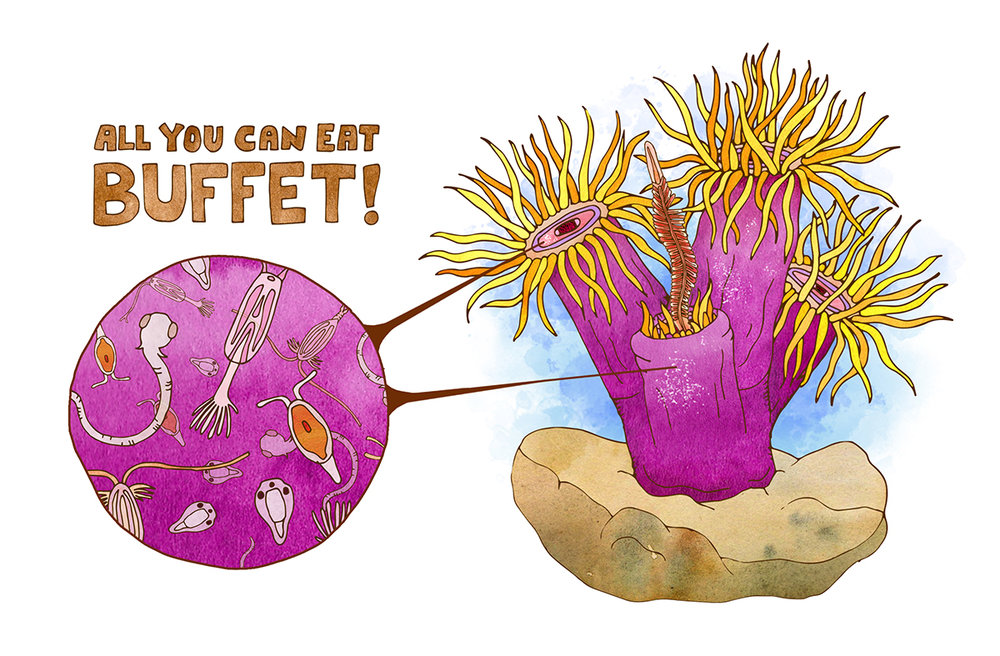 Coral_polyps.jpg