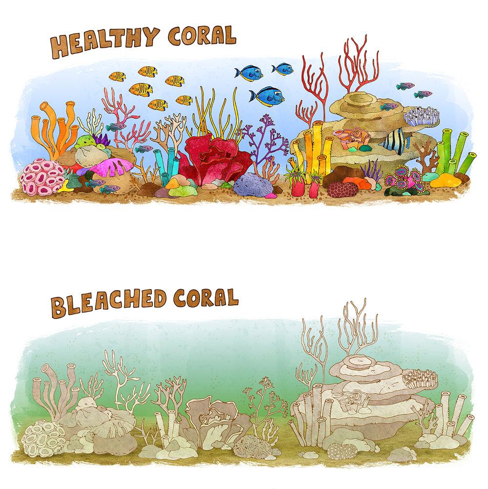 before&after_bleaching.jpg