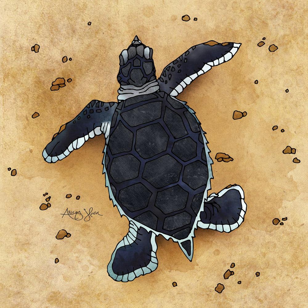 Sea_Turtle.jpg