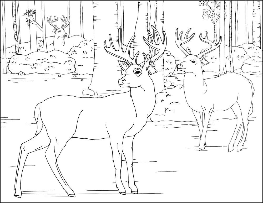 DeerFarming_ColoringSheet2.jpg
