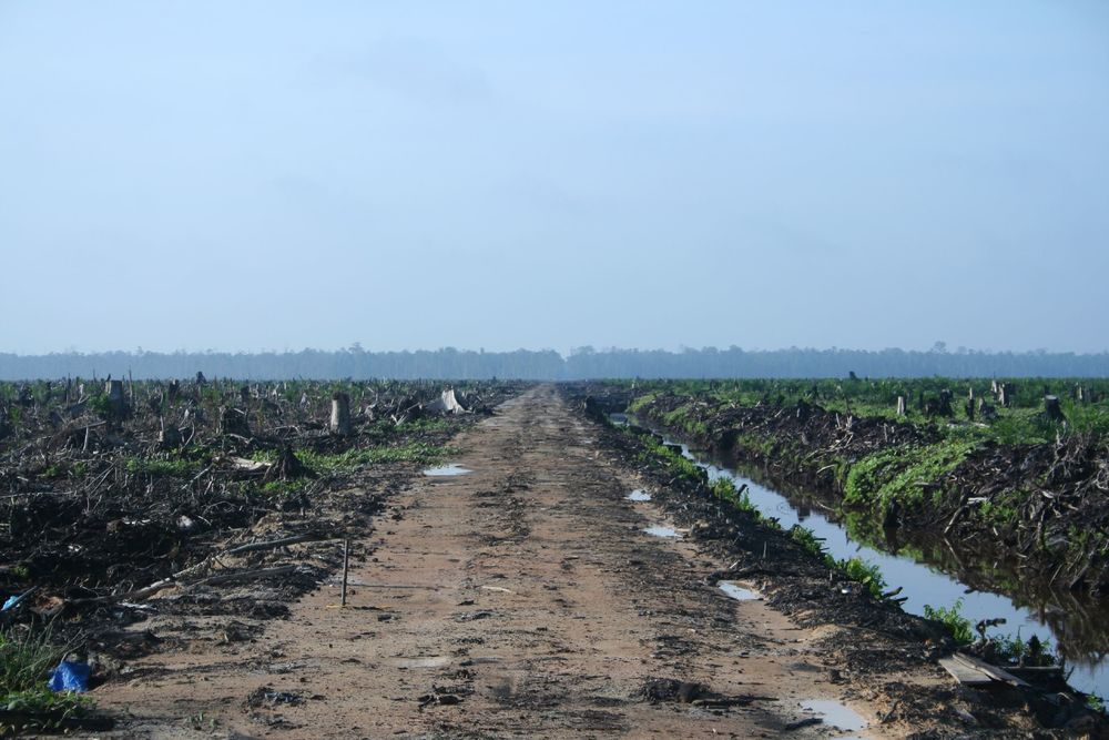 Riau Palm Oil Destruction