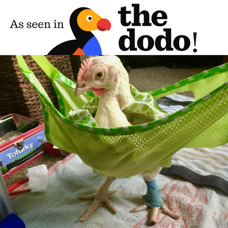 The rescue of Buckles and Pancakes in The Dodo!