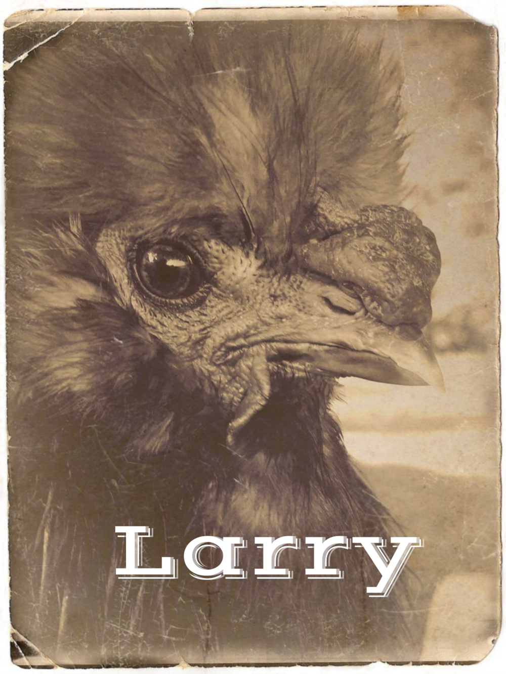 LARRY - an unwanted mail-order chick gifted to a secretary in NYC.