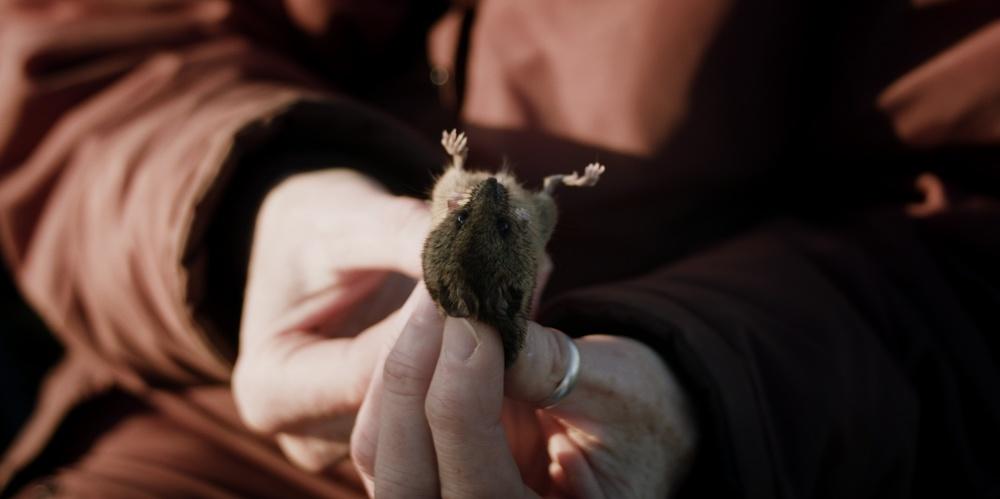 mice_1.52.1.jpg