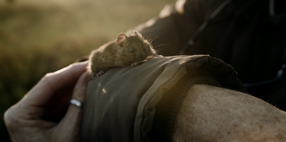 mice_1.159.2.jpg