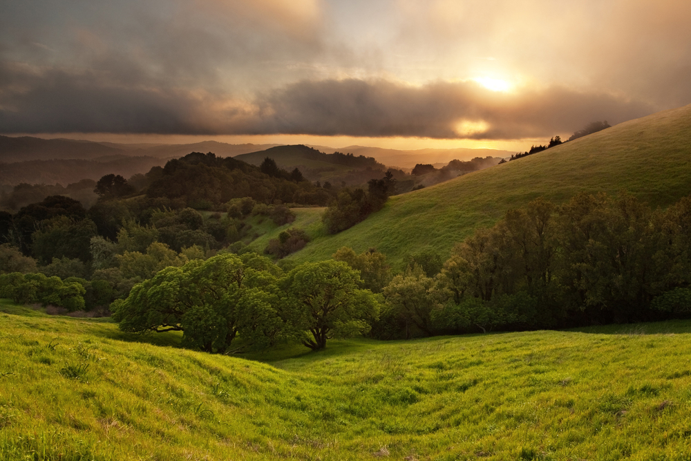 The Essence of Cannabis   From  Northern California   About