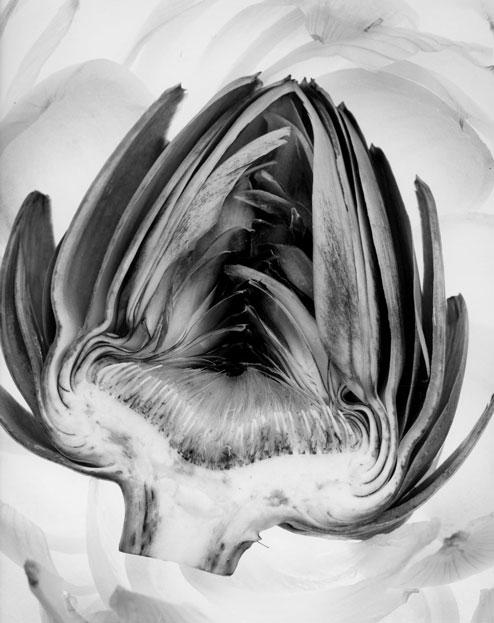 Fine Art 1st Place | ©Carole Schneider  Monterey Peninsula College