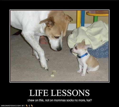 cute-puppy-pictures-life-lessons