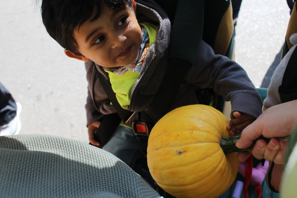 Touching the yellow pumpkin, discovering the bumps and smooth parts, the different texture of the stem, and the coolness of the pumpkin skin.