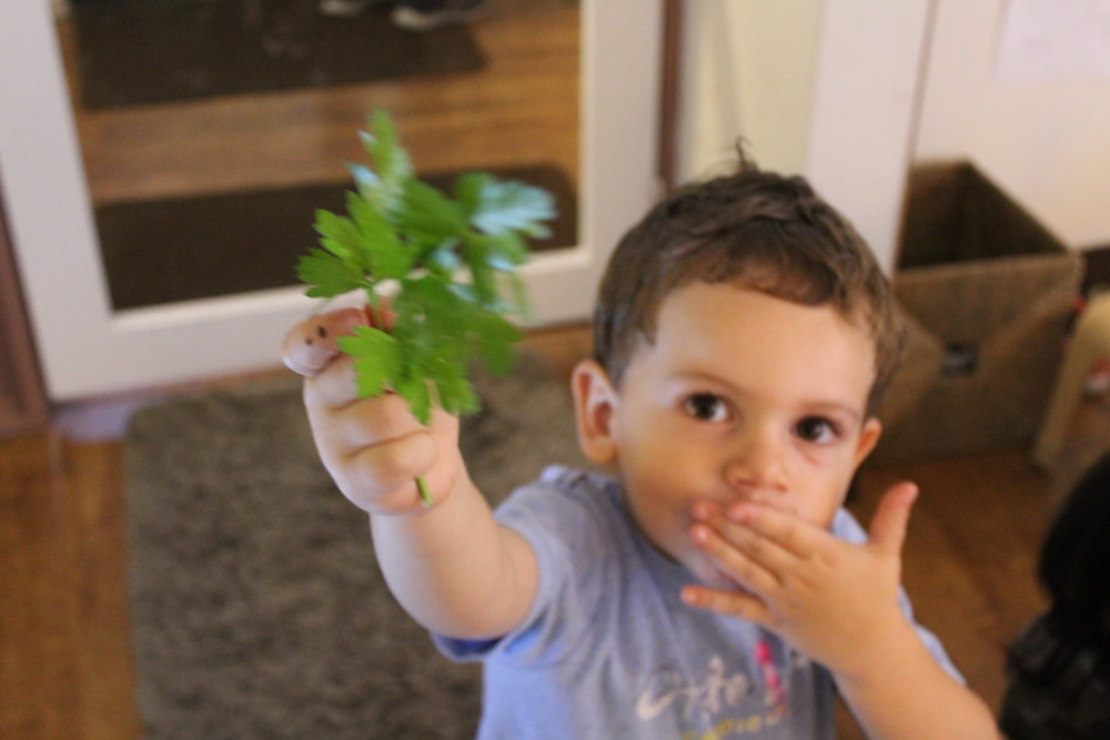 Smelling fresh herbs. Angelo found some parsley.