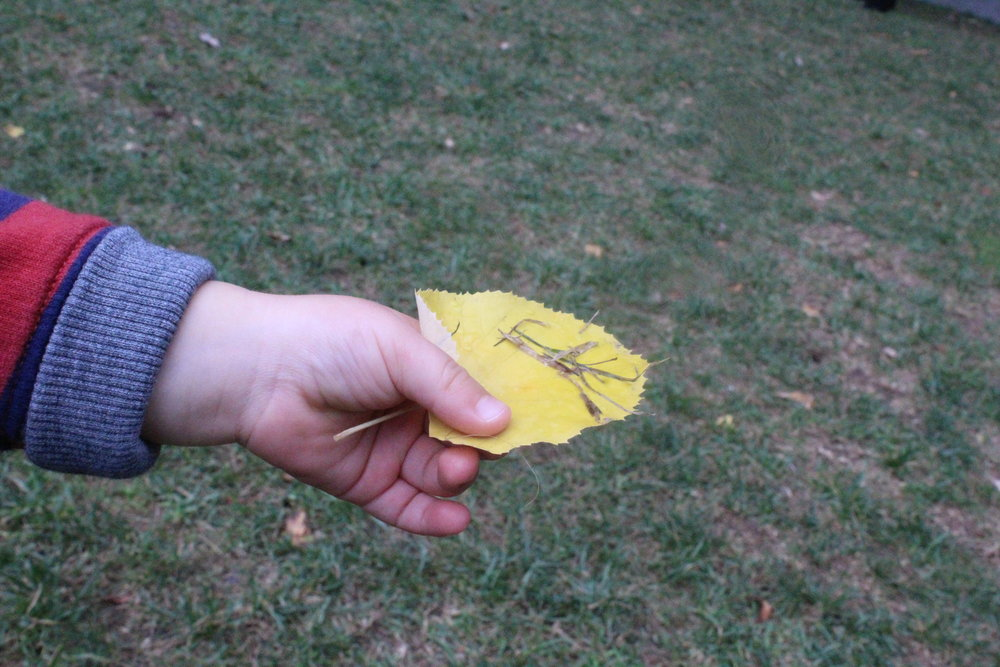 This week we walked to Morgan's Market to explore leaves!