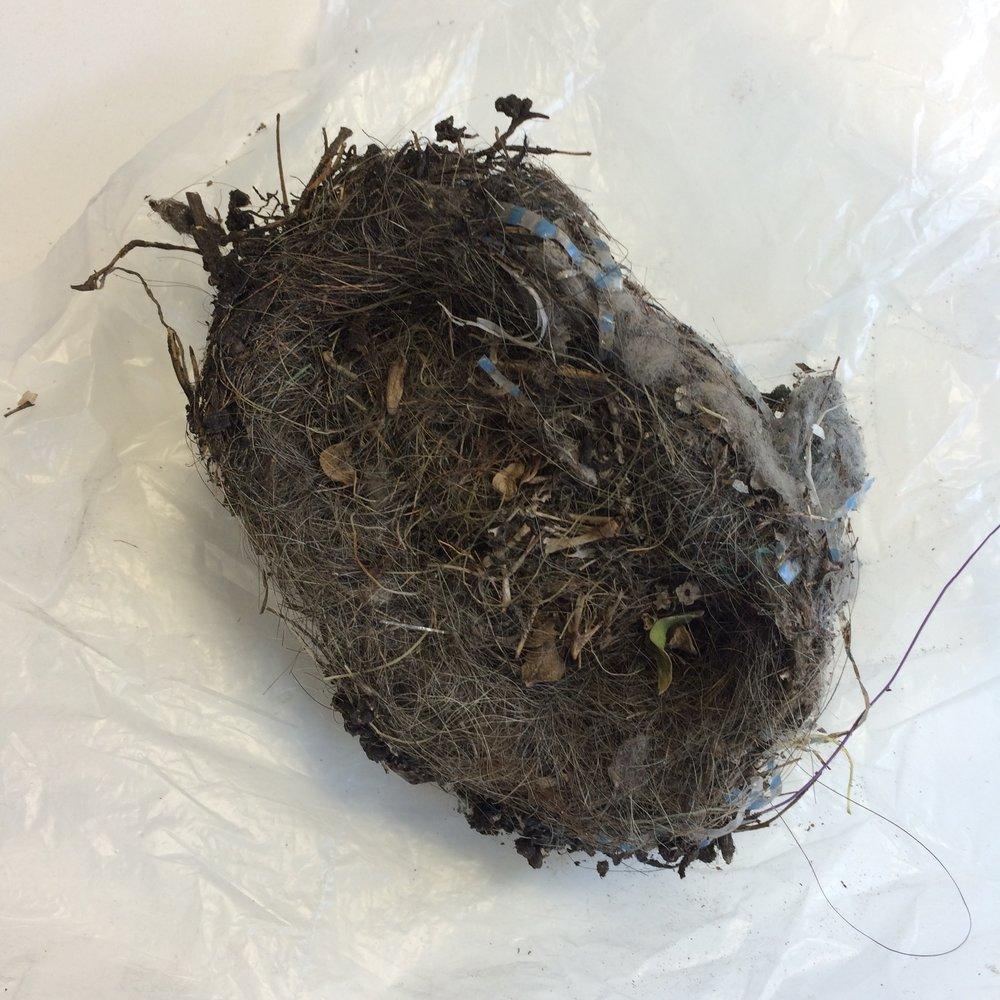 6. birds nest.jpg