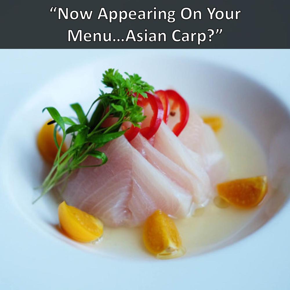 Nashville Scene Virago Chef Andrew Asian Carp