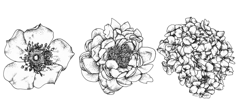 florals-1-3.png