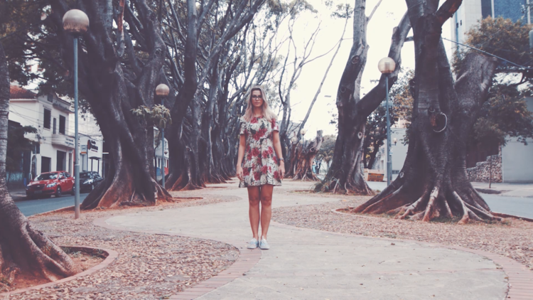 Ficus da Avenida Barbacena  https://goo.gl/OPwnTJ
