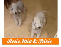 Rosie-Mia-Trixie.png