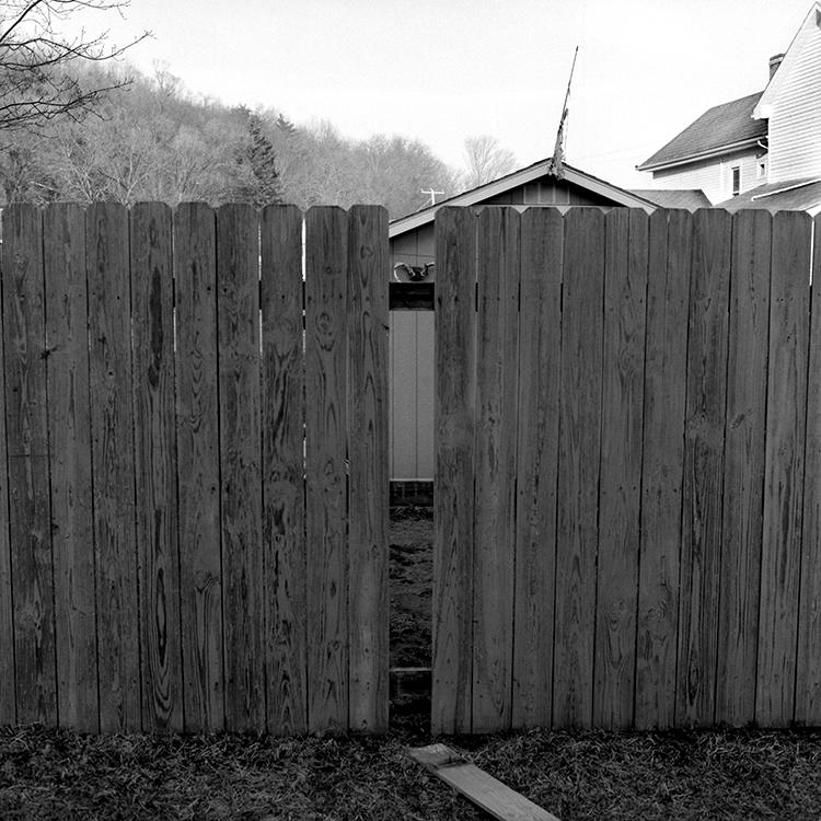 fence deer.jpg