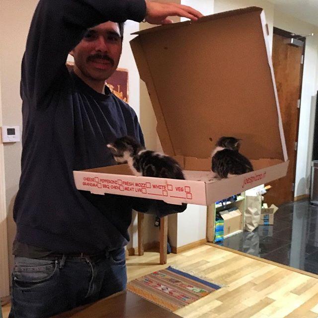 Awww look what's for dinner!! #kittenpizza