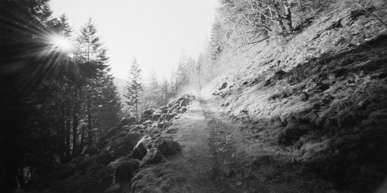 Herman Creek Trail.jpg