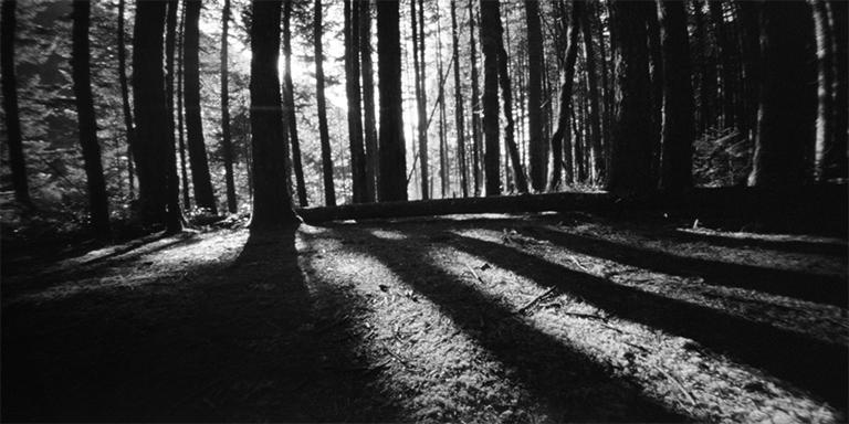 Herman Creef Forest.jpg