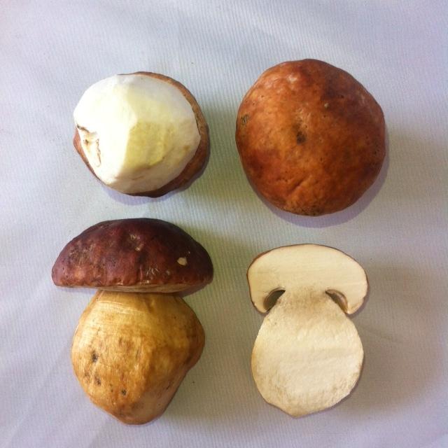 Grade #1 Wild Harvested Porcini Mushroom