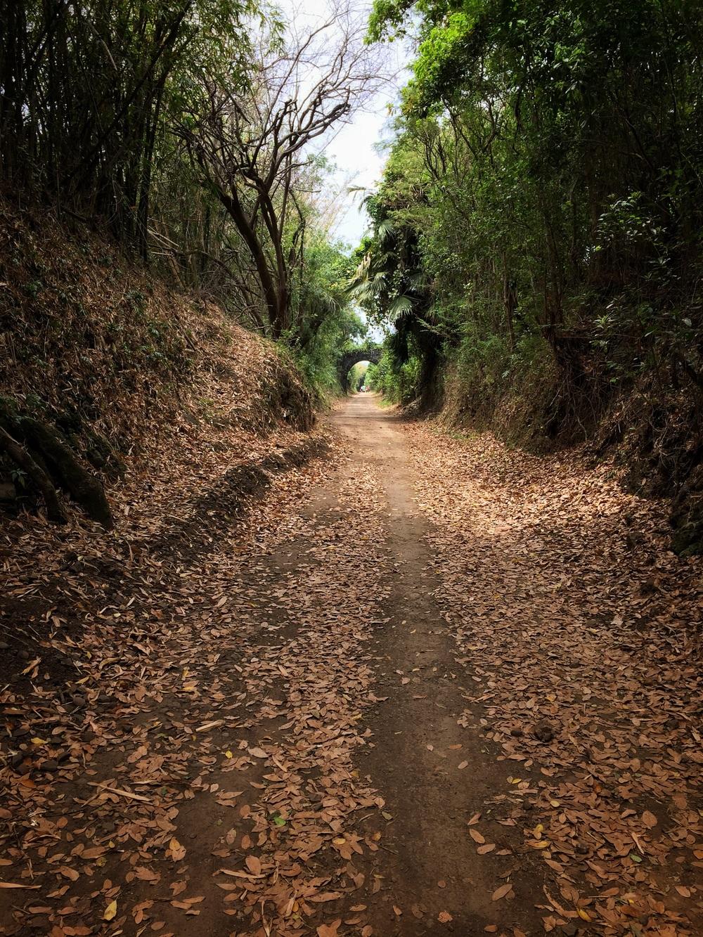 Trail running on La Côte Ste. Suzanne.