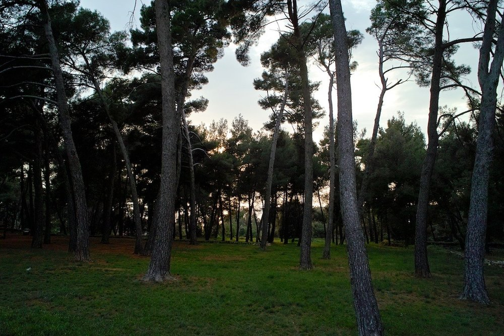 The park across the road from our place in Rovinj.
