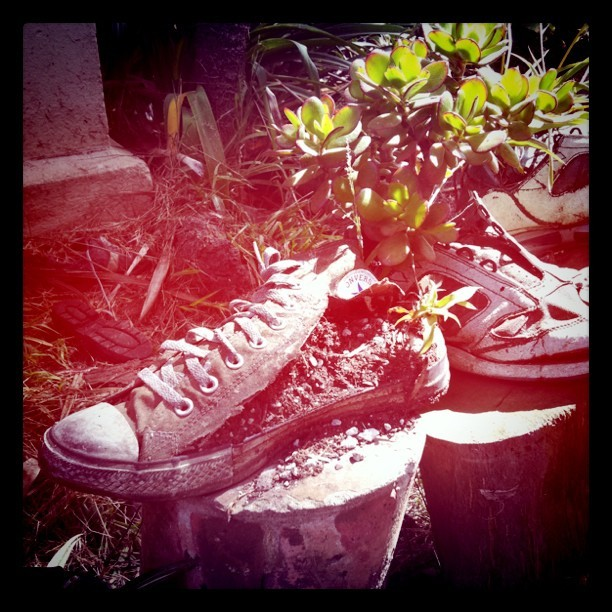 Shoe Garden (Taken with  instagram )