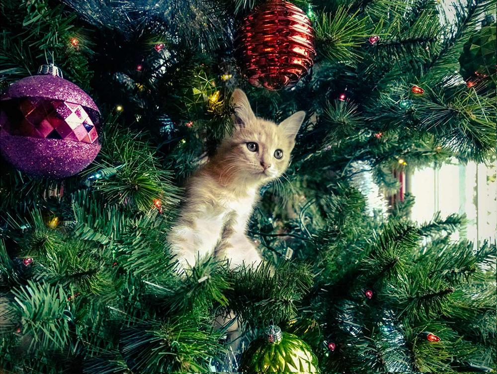 Nokia_holidayphotos_04.jpg