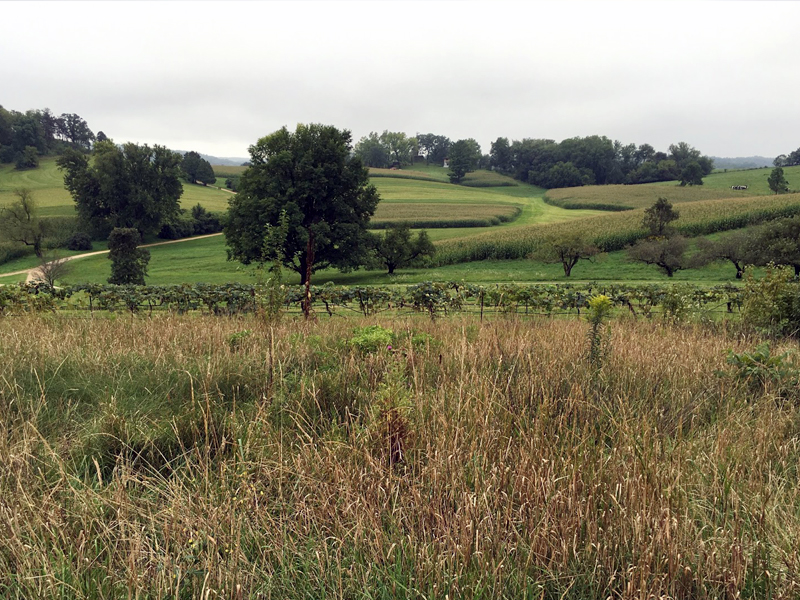 The Fields of Taliesin, Spring Green, WI