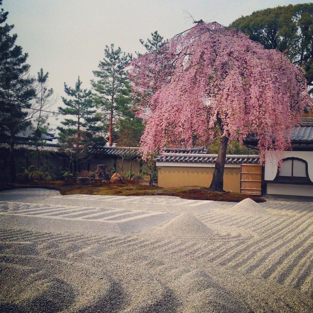 kyoto_kodaiji_sakura_zengarden