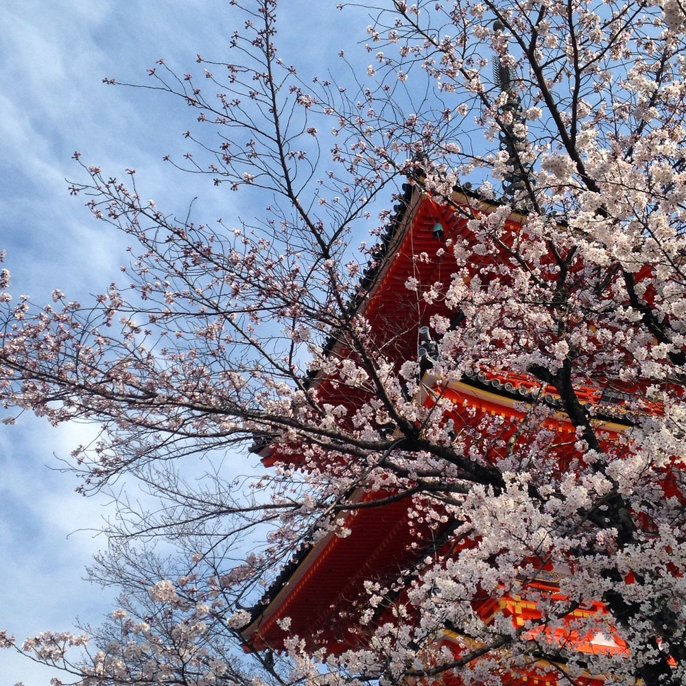 kyoto_sakura_kiyomizudera