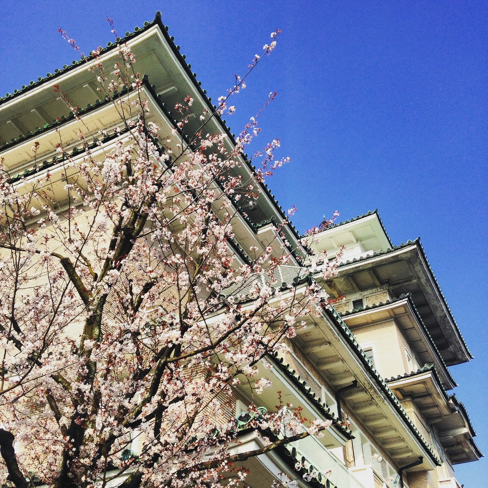 kyoto_gion_sakura