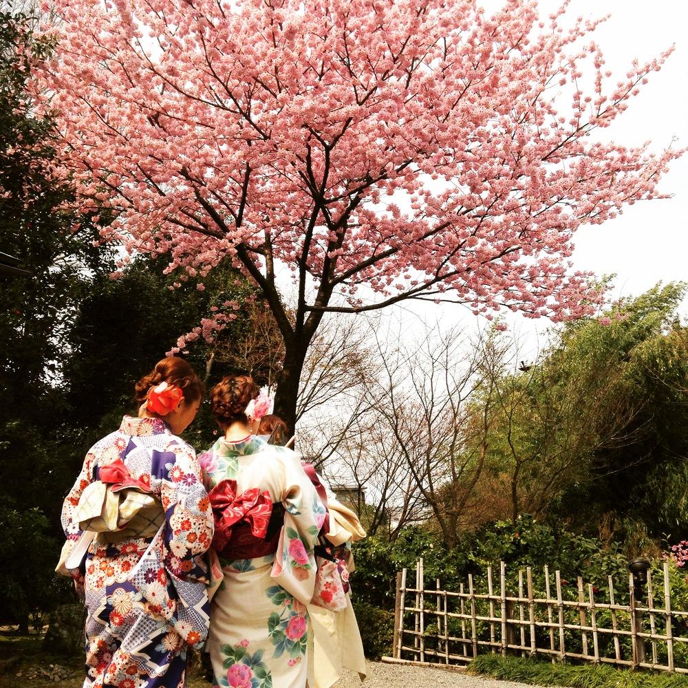 kyoto_sakura_kodaiji_kimono