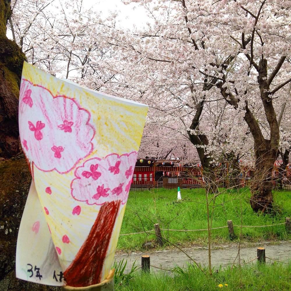 kyoto_sakura_hirano.JPG