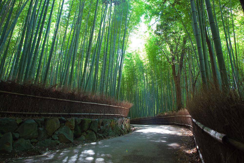 Sagano_Bamboo_forest,_Arashiyama,_Kyoto.jpg