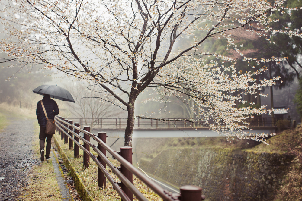 Umbrella by bridge and cherry tree.jpg