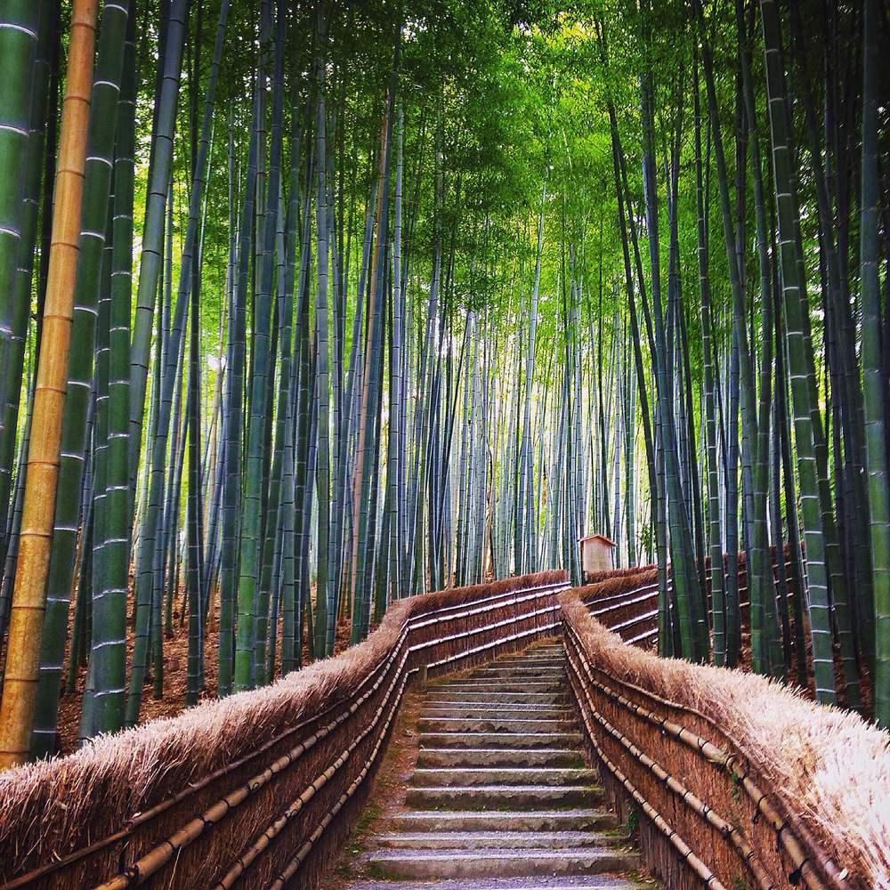 arashiyama-river-boat
