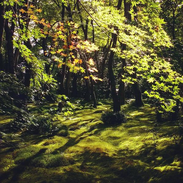 gioji moss garden arashiyama kyoto.png