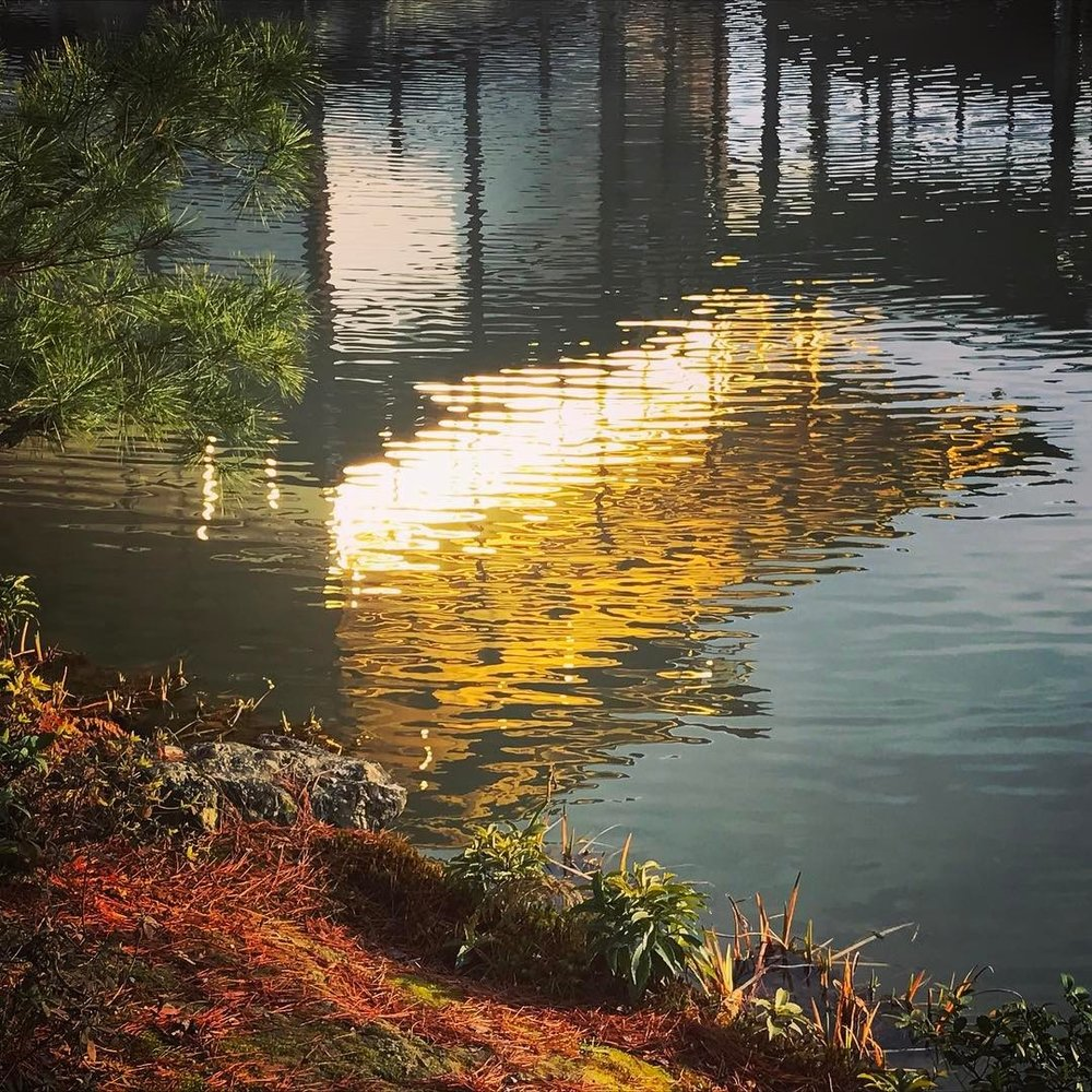 kinkakuji reflection.jpg