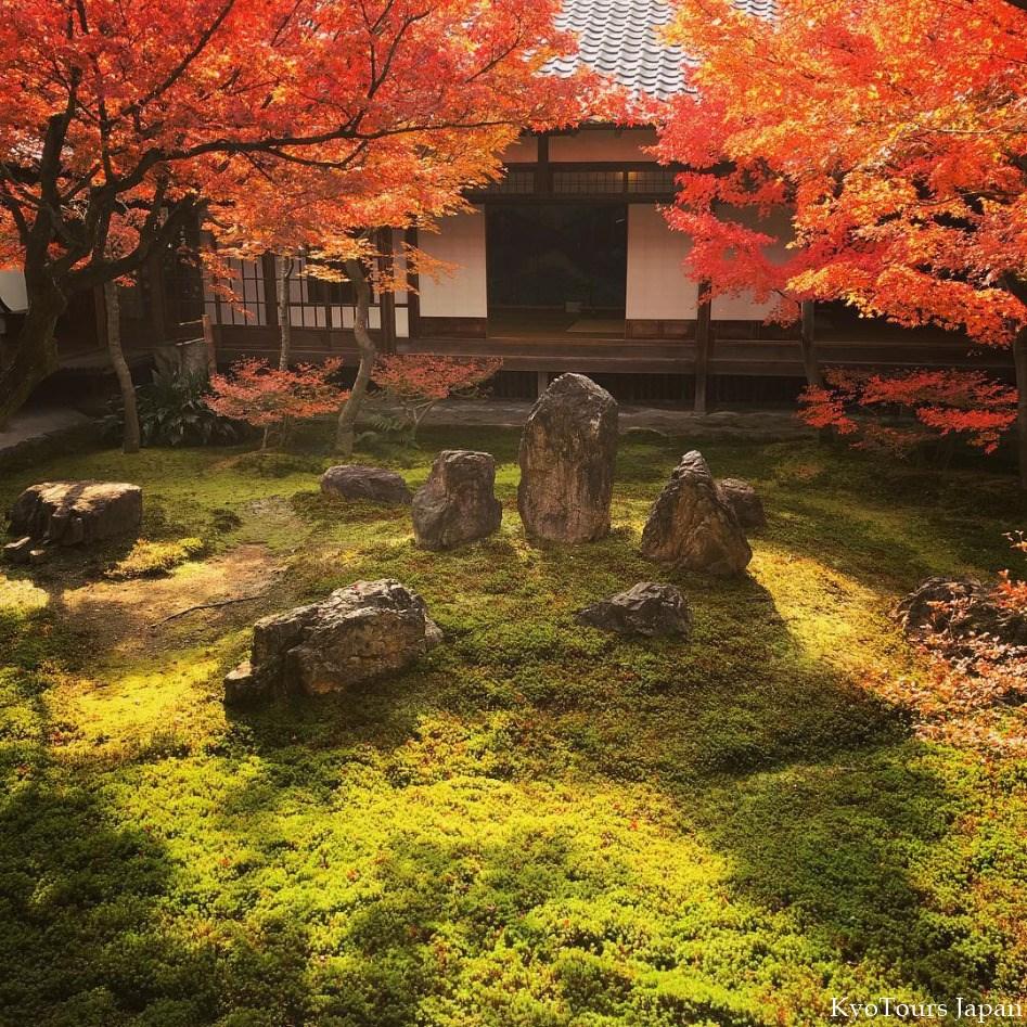 Autumn Leaves 2017 — Kyo Tours Japan