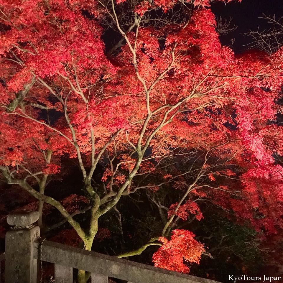 kyoto momiji 2017 KyoTours7.jpg