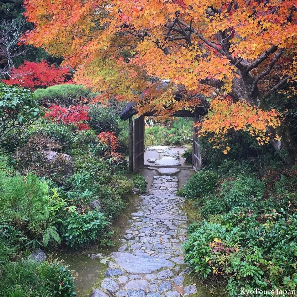 kyoto momiji 2017 KyoTours15.jpg