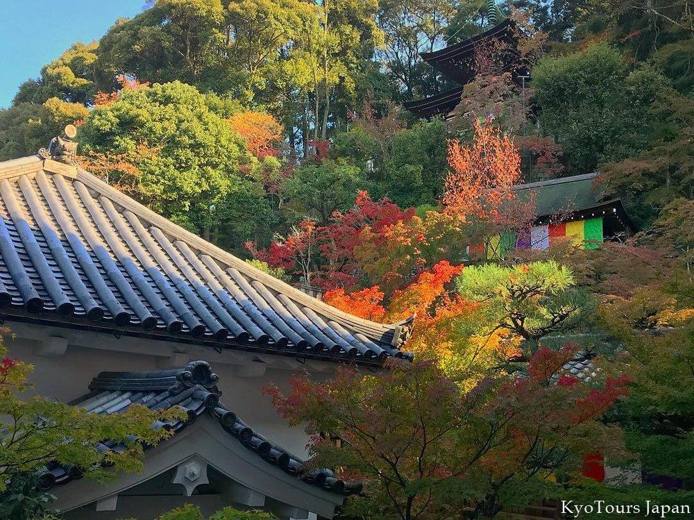 kyoto momiji 2017 KyoTours10.jpg