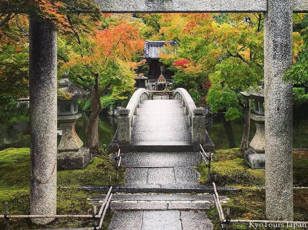 kyoto momiji 2017 KyoTours26.jpg