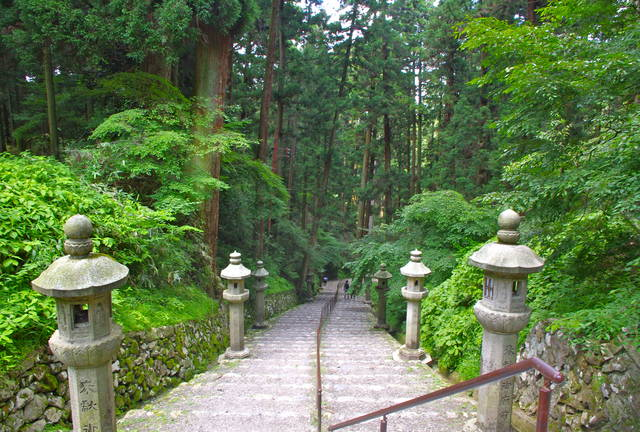 hiei steps forest