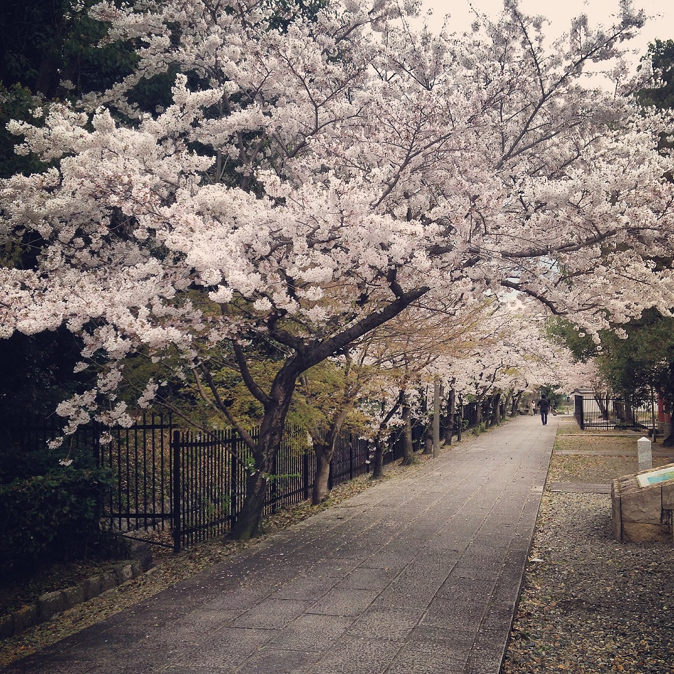 kyoto_sakura_2.jpg