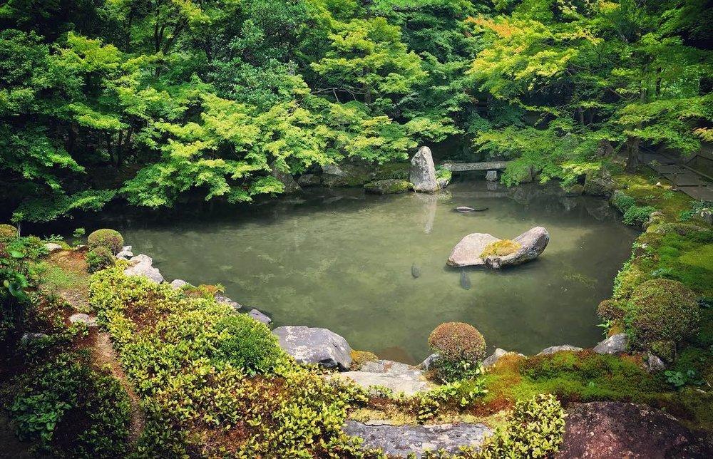 rengeji pond kyoto kyotours